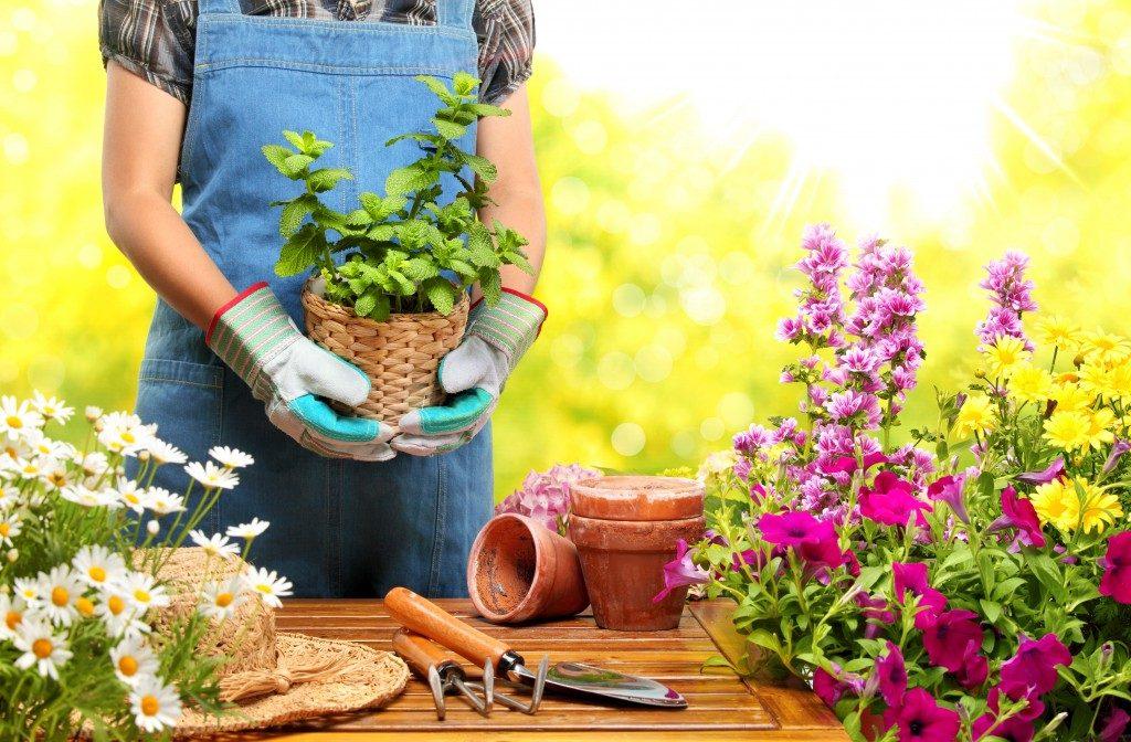 Gardener holding a pot