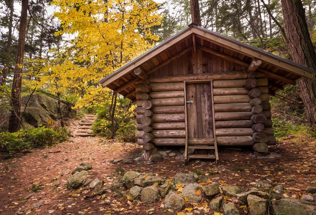 Log cabin in a forest